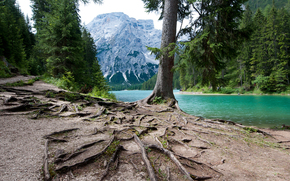 lake, Mountains, forest, Trees, the roots, Italy