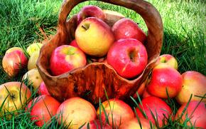 apples, ripe, Juicy, red, fruit, food, Vitamins, basket, grass, nature, summer