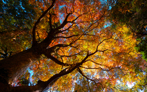 nature, Trees, crown, foliage, autumn