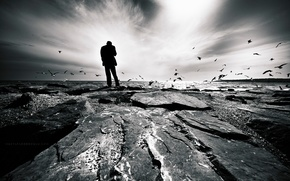 rock, uomo, pensieri, Uccelli, mare