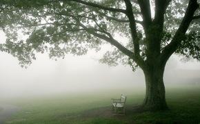 утро, туман, дерево, скамья