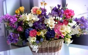 Flores, canasta, ramo, diferente, Hermoso, ranunkulyus, Freesia, jacintos