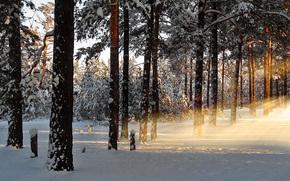 зима, рассвет, утро, лес, снег, лучи, природа