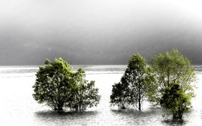 река, деревья, туман, природа, пейзаж