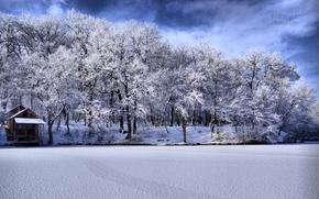 inverno, gelo, acqua, foresta, imperscrutabilit