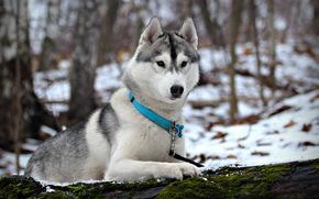 cane, Rauco, inverno, neve