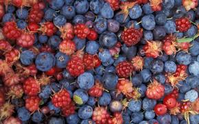 ягоды, еда, лесные ягоды