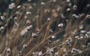 grass, plant