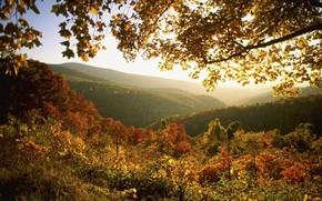 autunno, mattina, alba, sole, Montagne, foresta