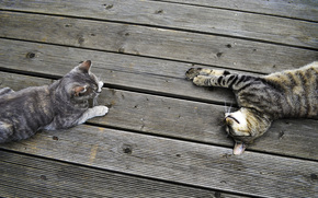 cat, board, recreation, band