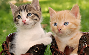 Котята, примерка, ботинки