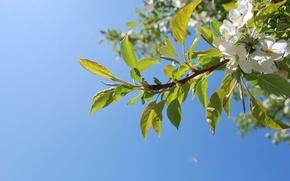 giardino, Bianco, fiori