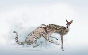 cerbiatto, leopardo, freno, umorismo