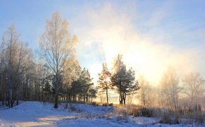 Winter, Morning, snow, Trees