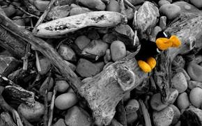 Steine, Filiale, Spielzeug, Farbe, Schwarz und Wei