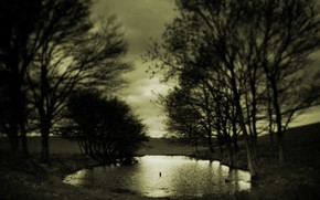 puddle, Trees, sepia, melancholy, autumn