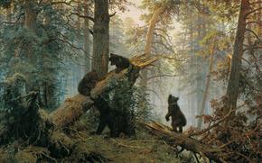 森, ベアーズ, パインの森の朝