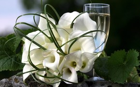 Flowers, bouquet, white, Callas, leaves, green, color, goblet, drink