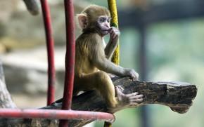 Tiere, Affe, Pinselffchen, Filiale