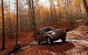 Land Rover, Discovery, machine, forest, autumn, wheelbarrow, SUV, Land Rover