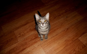 Кот, обои, животные, серый кот, текстура дерева