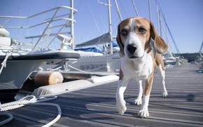 wharf, dog, berth, boat, boat, yacht