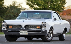 Pontiac, Tempest, TRP, front, white, muscle car, classic, tree, Other brands