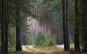 foresta, strada, tristezza, paura, boro, Foschia