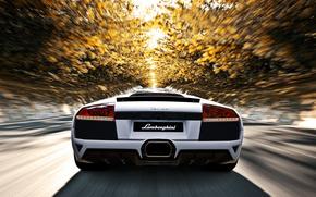 road, rate, Trees, autumn, sun, White, Lamborghini, murselago, Lamborghini