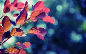 листья, дерево, блики