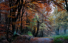 природа, лес, осень, деревья, листва, краски