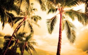palm, Palms, landscapes, nature, summer, evening, Beaches, coast, coast, ocean, sea, tree, Trees, foliage, leaves, leaflets, leaflets, leaflet, leaves, beauty, romance, Hawaii, Haiti, Tahiti, Maldives, Island, place, heat, sky, Widescreen Wallpaper,