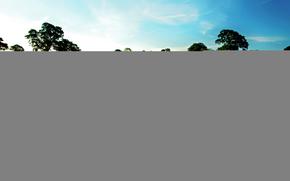 поле, лаванда, деревья, небо