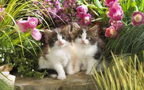 кошки, цветы, пушистые