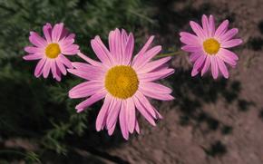 kwiaty, rowy, kwiaty