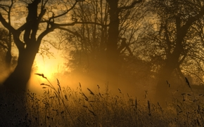 natureza, luz, ouro, grama, noite