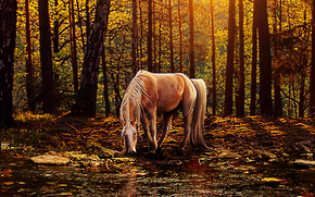 cavallo, foresta, abbeveratoio