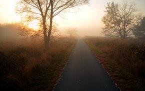 mattina, alberi, strada, paesaggio, natura