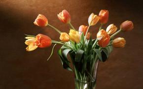 Tulips, yellow, red, orange, vase, wall