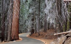 лес, дорога, деревья, иней