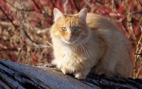 кошка, лето, природа
