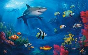 Underwater World, Corals, Sharks, turtle, Moray, fish