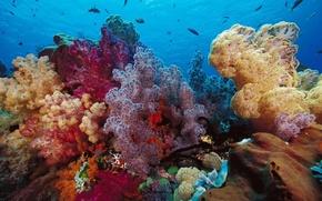 fondali marini, paesaggi sottomarini, vita, profondit, Corallo, pesce, colore