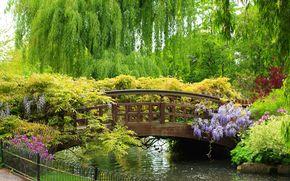 spring garden, bridge, park, beautiful, bridge, small river, fence, Plants, Flowers, Trees, weeping, willow, beauty