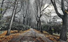 estrada, rvores, outono, paisagem