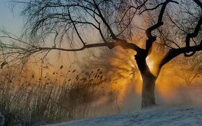 sun, fog, Morning, tree