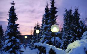 Naturaleza, invierno, nieve, tarde, luces, luz