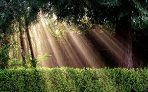 природа, дерево, забор, кусты, свет, лучи