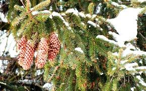 foresta, abete rosso, inverno, natura, neve