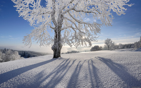 snow, sun, tree